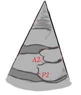 Fig5a